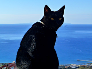 Winter Holidays in Crete - A sunny winter day at AnnaView apartments with our cat